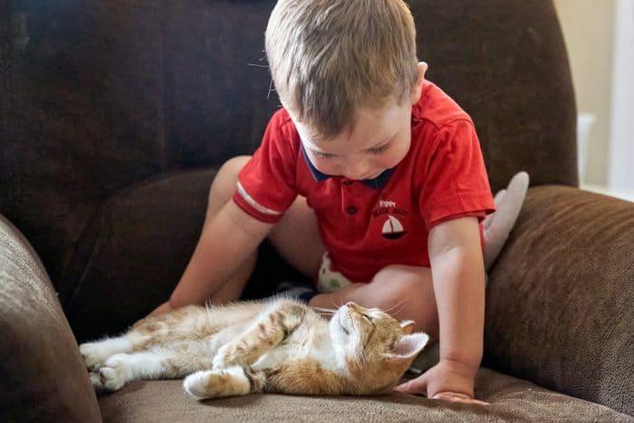 familienfotos hamburg ungestellt: Kind mit Katze